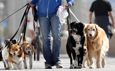 il cerca lavoro di ponenteoggi l 39 appello di una dog